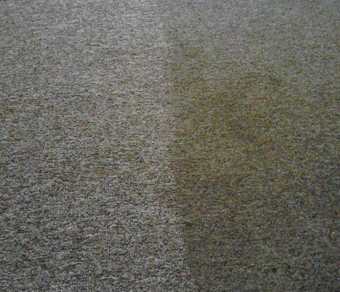 Carpet Cleaning in Ashland, KY After